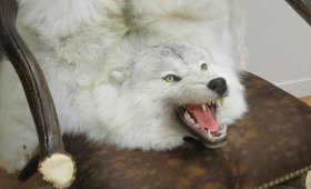 Ковер из шкуры полярного волка