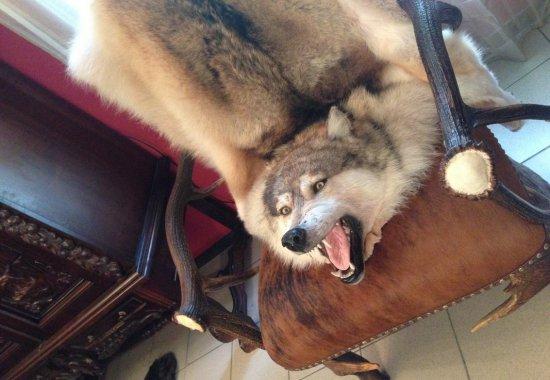 kover-iz-shkury-volka-polyarnyj