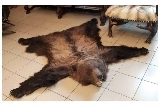 kover-iz-shkury-medvedya